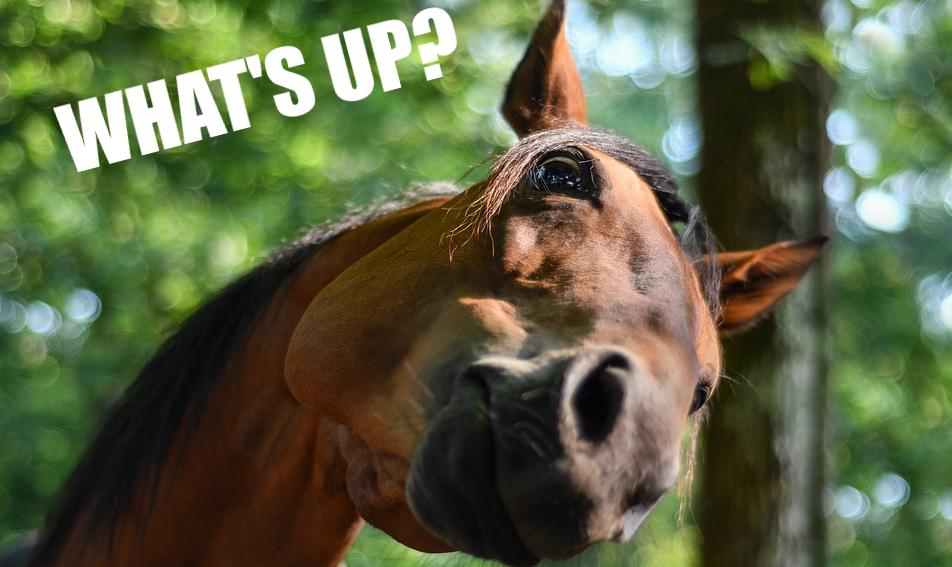 """Un mème avec une photo d'un cheval qui dit """"What's up?"""""""